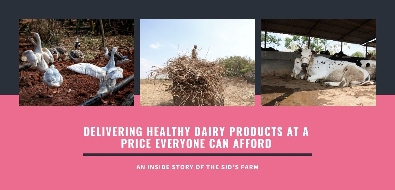 How Sid's Farm is Revolutionizing the Dairy Industry in Hyderabad?